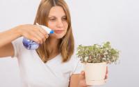 Lepiej zapobiegać niż leczyć. Choroby roślin doniczkowych