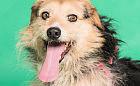 Tinder dla psów pomoże przygarnąć zwierzaka