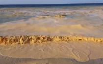 Zielonożółta woda w Bałtyku. To nie...