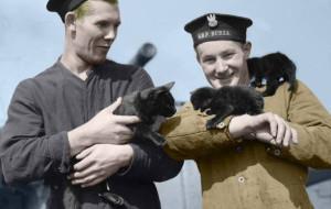 Zwierzęta w służbie na okrętach i w powietrzu