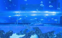 Pod Trójmiastem powstał park wodny z rekinami