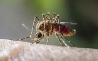 Jak odstraszyć komary i zmniejszyć ból po ukąszeniu?