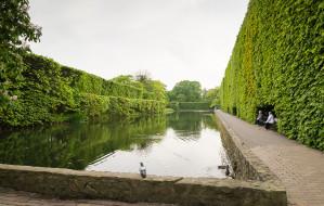 Osobny budżet obywatelski dla zieleni w mieście?