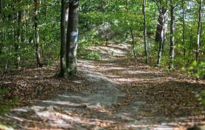 Leśna trasa łącząca cztery gdyńskie dzielnice zyska oznakowanie