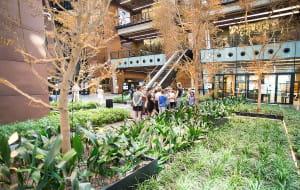 W Europejskim Centrum Solidarności uschły drzewa warte 260 tys. zł