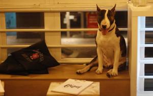 Pies też klient i ma swoje menu