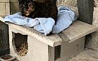 Koiot, czyli kotka z wydziału Oceanotechniki i Okrętownictwa