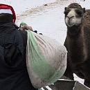 Zwierzęta z oliwskiego Zoo zapraszają w Święta