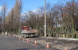 Gdynia: wytniesz drzewa, jeśli zapłacisz