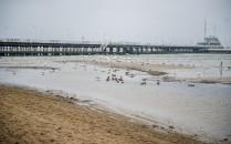 Zniknie piaskowa łacha przy molo w Sopocie