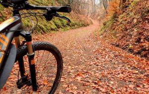 5 mln zł dotacji na modernizację szlaków w Trójmiejskim Parku Krajobrazowym