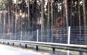 Nowe ogrodzenie przy obwodnicy ma powstrzymać zwierzęta