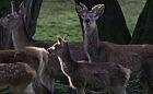 Zagrożenia dla Trójmiejskiego Parku Krajobrazowego