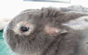 Prokuratura bada sprawę 100 porzuconych królików