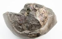 Zwiedzanie alternatywne: szlakiem trójmiejskich skamieniałości