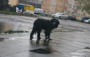 Zaniedbany pies miesiącami bez pomocy