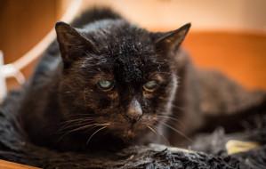 Koty w schroniskach starzeją się szybciej