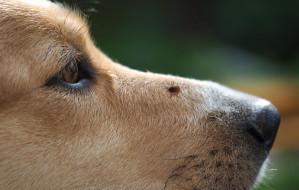 Kleszcze zagrożeniem dla zwierząt domowych