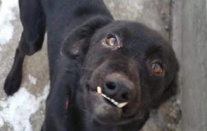 Gdańszczanka szuka domów dla zwierząt z Ukrainy
