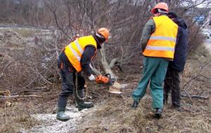 Ruszyła wycinka drzew dla ul. Nowej Słowackiego