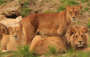 Pomóż usprawnić funkcjonowanie zoo