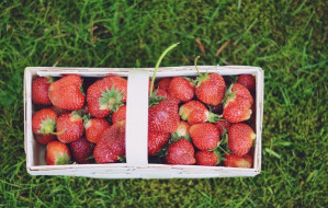 Historie kulinarne: lato w pełni