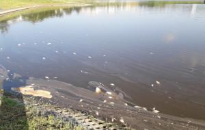 Masowe śnięcie ryb w zbiorniku retencyjnym w Gdańsku