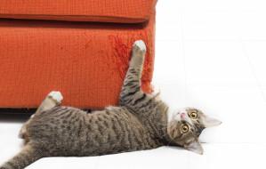 Kocie porady: gdy kot drapie i niszczy meble