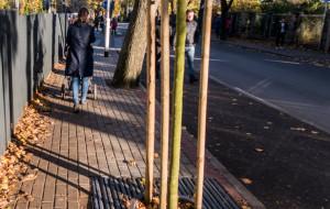Nie cichnie spór o drzewa w Orłowie