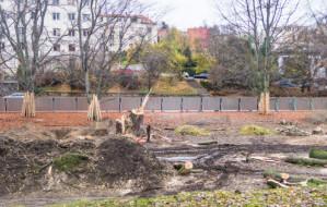 Wycinka drzew na początek budowy Parku Centralnego