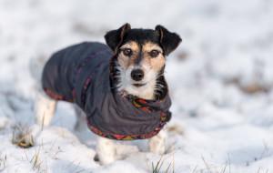 By było ciepło: ubranka dla psów na zimę