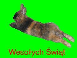 Wesołych Świąt Polsko!