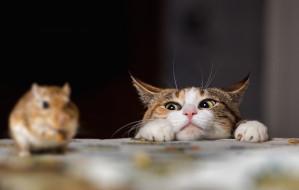 Kot wychodzący: zagrożenie dla innych zwierząt?