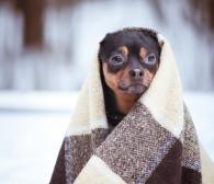 Czego zimą potrzebują schroniska? Praktyczne pomysły i imprezy dla zwierzaków