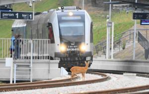 Czy rozkład pociągów może być lepszy?