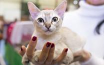 Ponad 200 rasowych kotów na wystawie w...