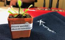 Jak wygląda erotyczne życie roślin? Nauka...