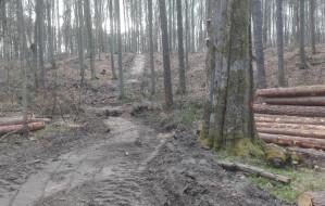 Widok wyciętych drzew smuci spacerowiczów