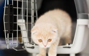 Jak wybrać idealny transporter dla kota?