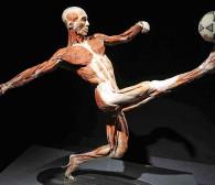 Uznana za kontrowersyjną wystawa Body Worlds zmienia Polaków