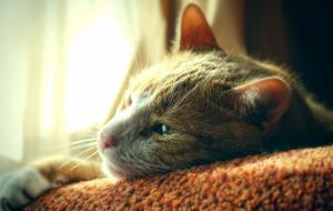 Kocie porady: o kociej żałobie