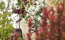 Duże zainteresowanie targami ogrodniczymi...