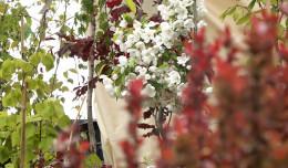 Duże zainteresowanie targami ogrodniczymi w Osowej