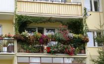 Ukwiecony balkon zamiast ogrodu