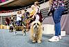Dzień Psa w Ergo Arenie
