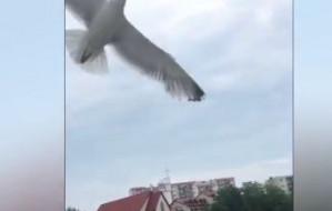 Agresywne ptaki: problem nie do rozwiązania?