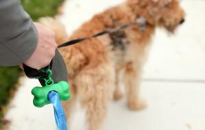 Nie wstydź się, posprzątaj po swoim psie