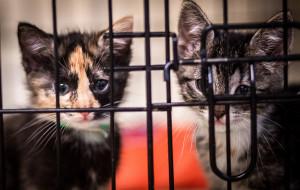 Adoptuj kociaka: ponad 50 maluchów w Ciapkowie