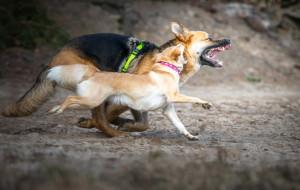 Agresywny pies. Co robić?