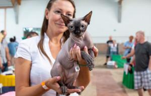 Ponad 240 kotów rasowych na wystawie na Hipodromie
